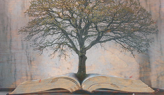 A tree and a book